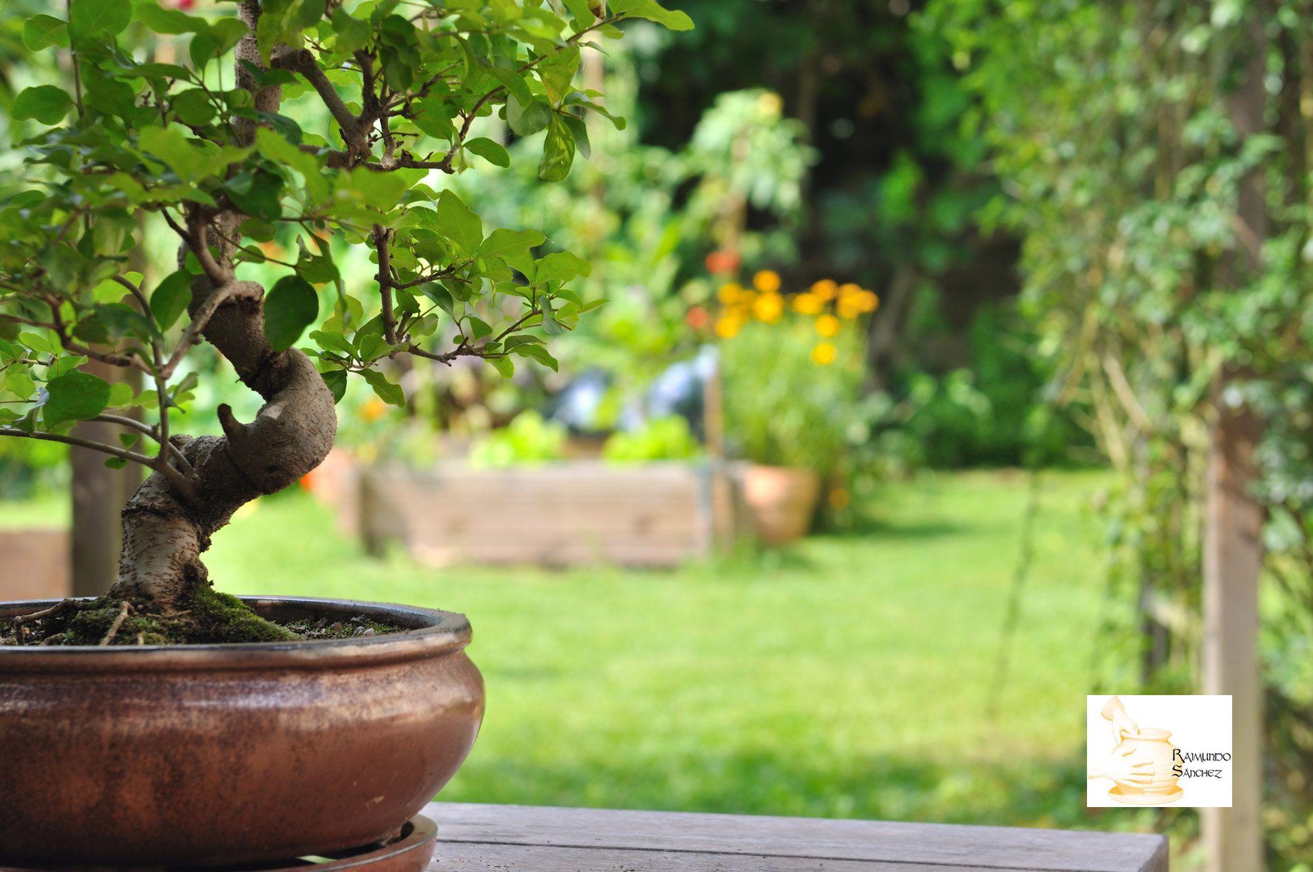 Alfarería Raimundo Sánchez explica las ventajas de usar una maceta de bonsái de barro