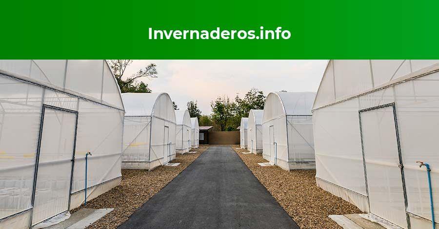Guantes y ropa agrícola para invernadero según Invernaderos.info