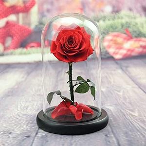 Eterno mercado de flores vale la pena observar el crecimiento: Leselle, Venusetfleur, Enduraroses, Mfleursmtl